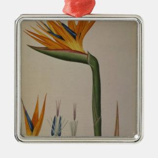 Strelitzia Reginae, from 'Les Strelitziacees' Silver-Colored Square Decoration