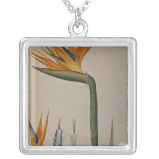 Strelitzia Reginae, from 'Les Strelitziacees' Silver Plated Necklace