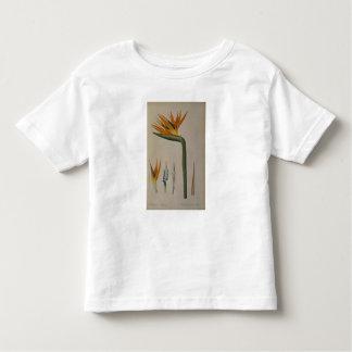 Strelitzia Reginae, from 'Les Strelitziacees' Toddler T-Shirt