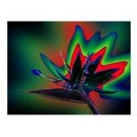 Strelizie neon postkarte