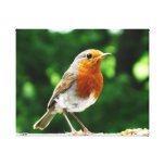 Stretched Canvas bird Print, Robin Gallery Wrap Canvas