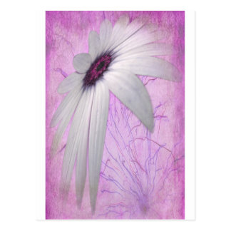 stretched daisy. postcard