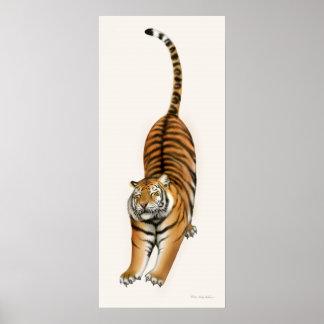 Stretching Bengal Tiger Print