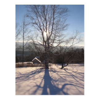 stretching birch postcard