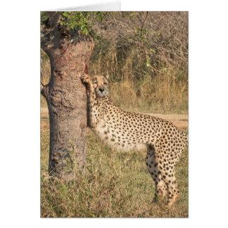 Stretching Cheetah Greeting Card
