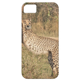 Stretching Cheetah iPhone 5 Cases