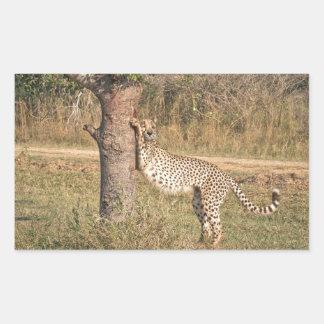 Stretching Cheetah Rectangular Sticker
