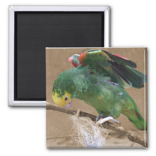 Stretching Double Yellow Headed Amazon Parrot Square Magnet