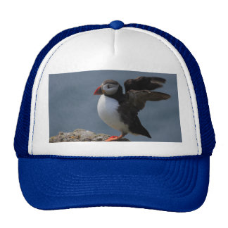 Stretching Puffin Hat