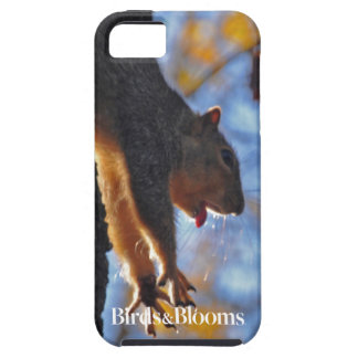 Stretching Squirrel iPhone 5 Cover