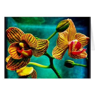 Striking Phalenopsis Orchid Blank Greeting Card
