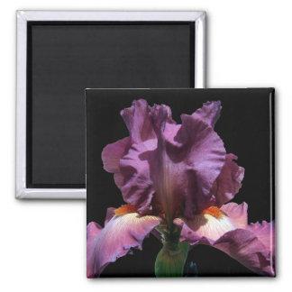 Striking Purple Iris Magnet
