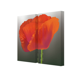 Striking Red Poppy Flower Stretched Canvas Print