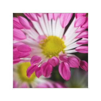 Striking two tone flower canvas print