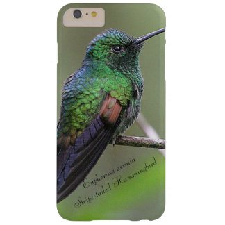 Stripe-tailed Hummingbird Barely There iPhone 6 Plus Case