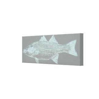Striped Bass Canvas Print