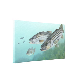 Striped Bass Painting Canvas Prints