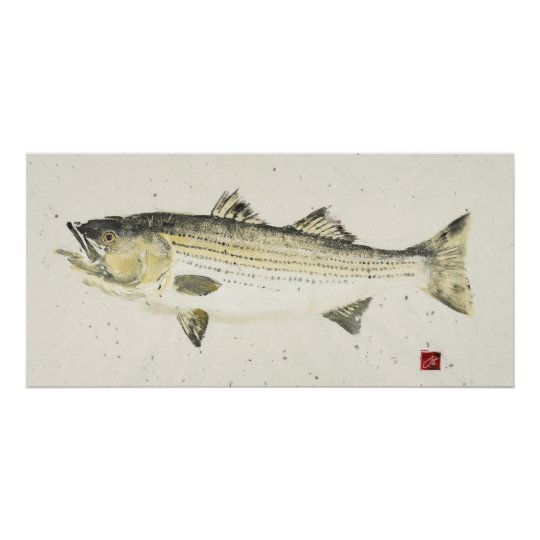 Striped Bass/ Speckled paper Poster