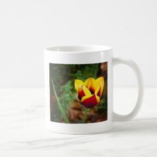 Striped Bellona Tulip Coffee Mug