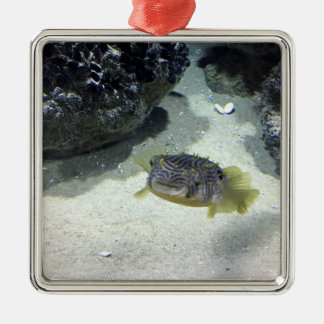 Striped Burrfish Christmas Ornament
