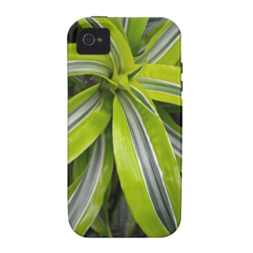 Striped green tropical leaves iPhone 4 case
