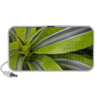 Striped green tropical leaves iPod speakers