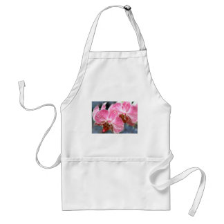 Striped Pink Phalaenopsis Orchids Standard Apron