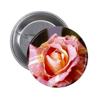 Striped Rose Buttons
