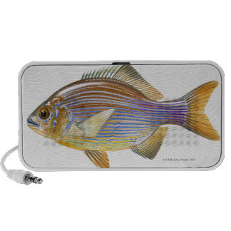 Striped Seaperch Notebook Speaker