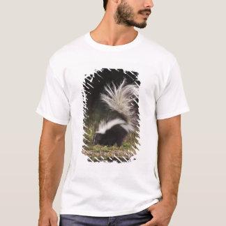 Striped Skunk, Mephitis mephitis, adult at T-Shirt