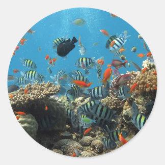 Stripey Fish Round Sticker