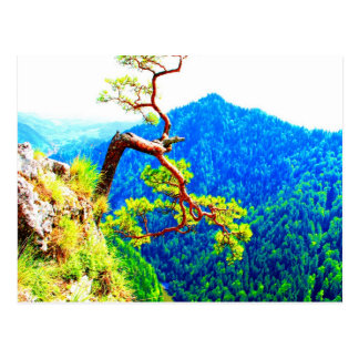 Strong life mountain top tree peek view tatra pola postcard