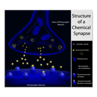 Structure of a synapse print