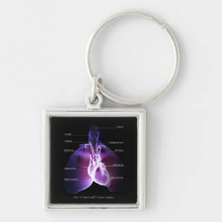 Structure of the heart and lungs key ring