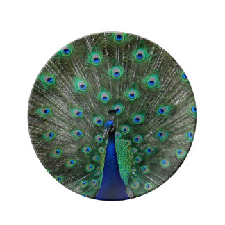 Strutting Male Peacock Porcelain Plate