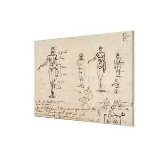Studies of anatomy with measurements and writing ( canvas print