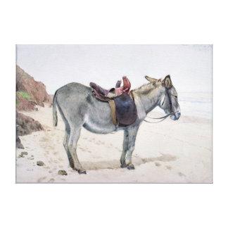 Studies of Animals Canvas Print