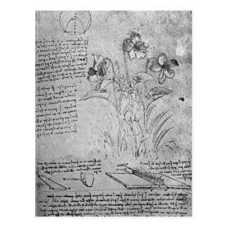 Studies of Violas Postcard