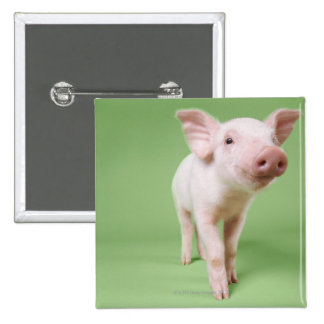 Studio Cut Out of a Piglet Standing 15 Cm Square Badge