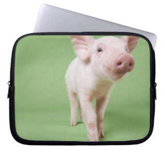 Studio Cut Out of a Piglet Standing Computer Sleeves