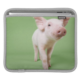Studio Cut Out of a Piglet Standing iPad Sleeve