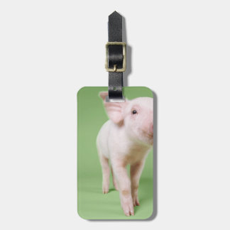 Studio Cut Out of a Piglet Standing Luggage Tag