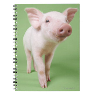 Studio Cut Out of a Piglet Standing Notebook