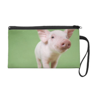 Studio Cut Out of a Piglet Standing Wristlet