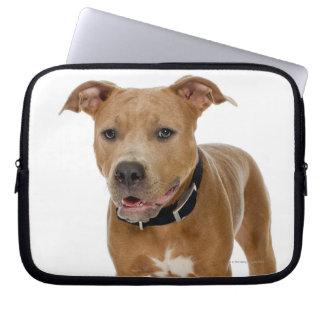 Studio portrait of American pit bull puppy 2 Laptop Sleeve