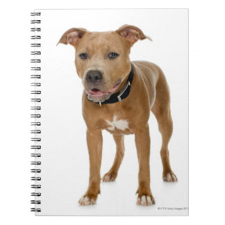 Studio portrait of American pit bull puppy 2 Notebooks