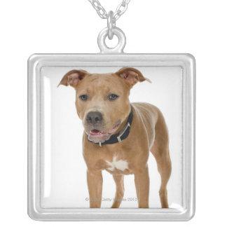 Studio portrait of American pit bull puppy 2 Square Pendant Necklace