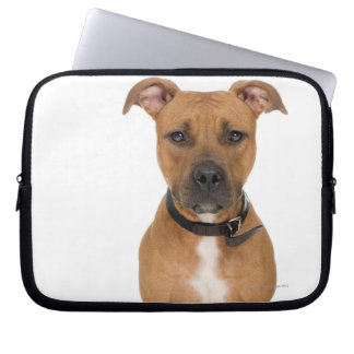 Studio portrait of American pit bull puppy 3 Laptop Computer Sleeve