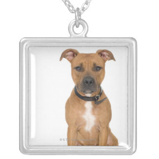 Studio portrait of American pit bull puppy 3 Silver Plated Necklace