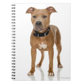 Studio portrait of American pit bull puppy Notebooks